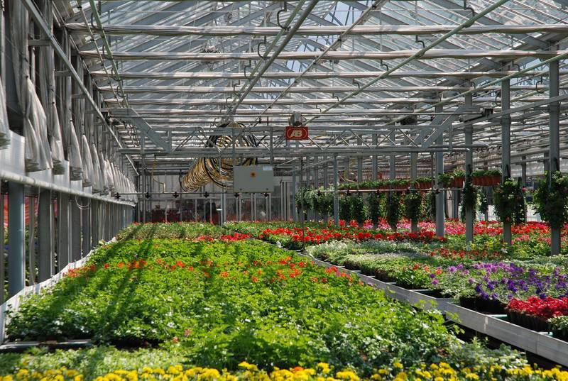 Corso per difendere piante e fiori in serra iscrizioni for Serra per piante