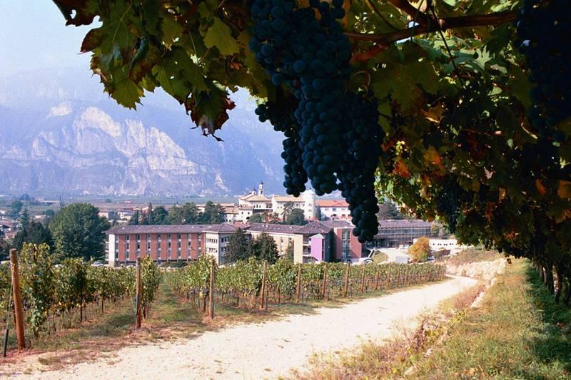 Ufficio Formazione Per La Ricerca Uniud : Laurea in viticoltura ed enologia firma della convenzione tra unitn